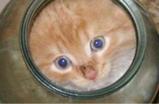 Сеть покорила кошка, помогающая котенку выбраться из банки