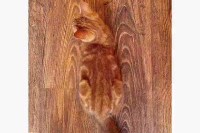 Кот-хамелеон повеселил пользователей Cети