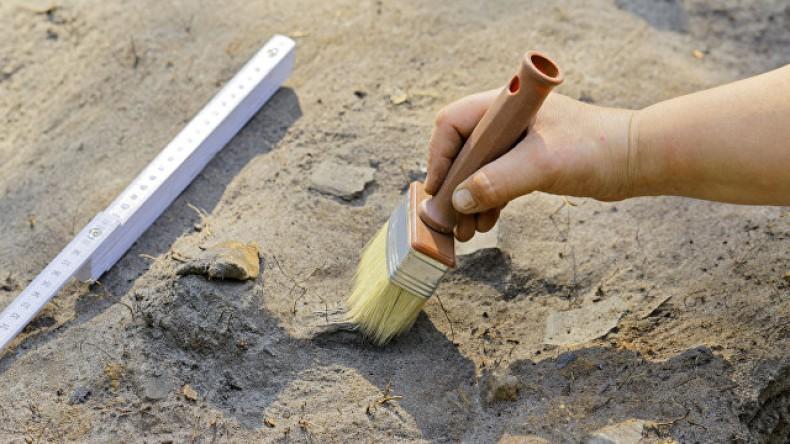 В Крыму нашли останки мамонтов