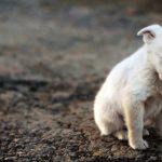 На Урале мужчина может получить пять лет тюрьмы за жестокое обращение с животным
