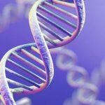 Генетика не влияет на продолжительность жизни