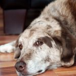 Усыпление и кремация домашних животных