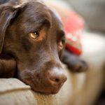 Усыпление собак гуманным способом профессиональными врачами