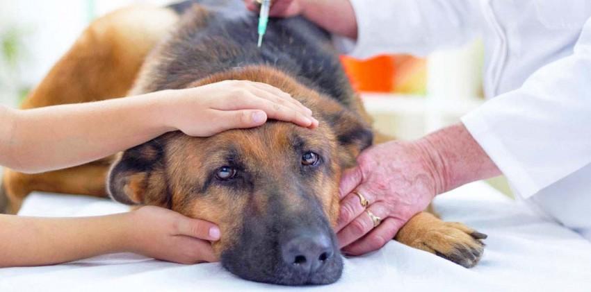 Гуманное и безболезненное усыпление животных