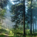 Леса не спасут Землю от парникового эффекта