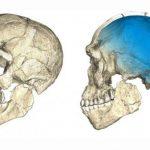 Ученые ошибаются: черепа, найденные в Греции, принадлежат вовсе не Homo sapiens