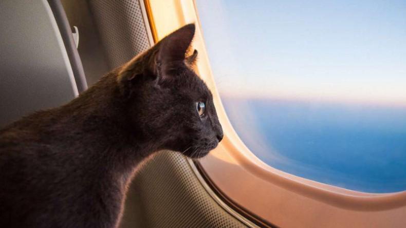 В России изменят правила провоза животных в самолётах
