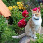 Правила создания ландшафтного дизайна с комфортом для кошек