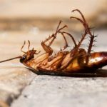 Как эффективно избавиться от тараканов